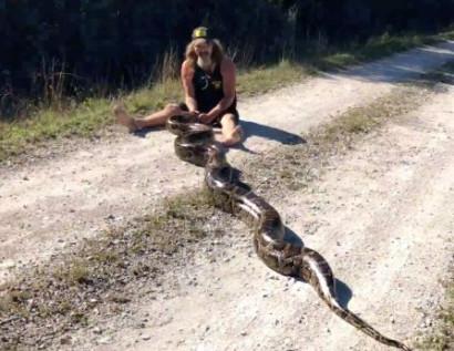 Ֆլորիդայում տղամարդը մերկ ձեռքերով 5 մետրանոց հղի պիթոն է որ....