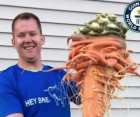 Minnesota gardener grows world's largest carrot