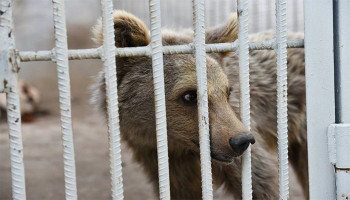 Ի՞նչ կենդանիներ են հայտնաբերվել Մանվել Գրիգորյանին պատկանող տարածքում