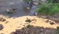 Ալավերդու պղնձաձուլական գործարանի թափոնները լցվում են Դեբեդ գետը (տեսանյութ)