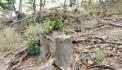 «Դիլիջան ազգային պարկ»-ում ապօրինի ծառահատման գործով մեղադրանք է առաջադրվել ևս 2 անտառապահի