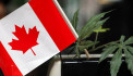 Canada becomes second country to legalise recreational marijuana