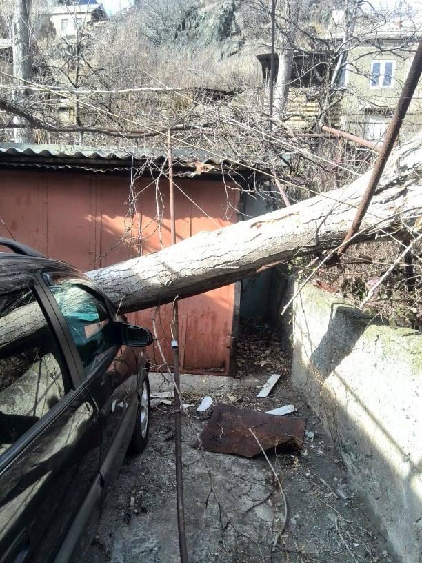 «Օրեր շարունակ մեքենայի տերը չի թույլատրում ծառը հեռացնել ու ճիշտ է անում». Օլեգ Դուրգարյան