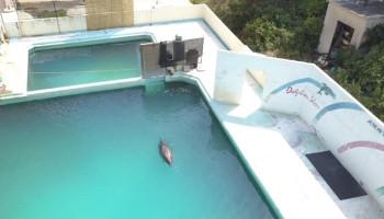 В Японии владельцы забросили морской парк и наплевали на судьбу оставшихся животных