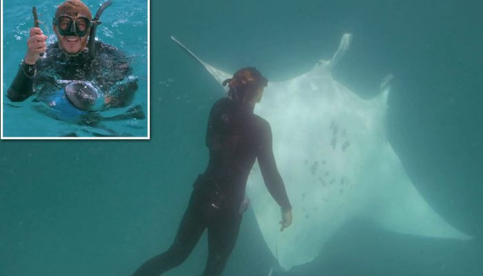 Amazing moment manta ray known as Freckles approaches snorkellers for help removing a fish hook from her eye