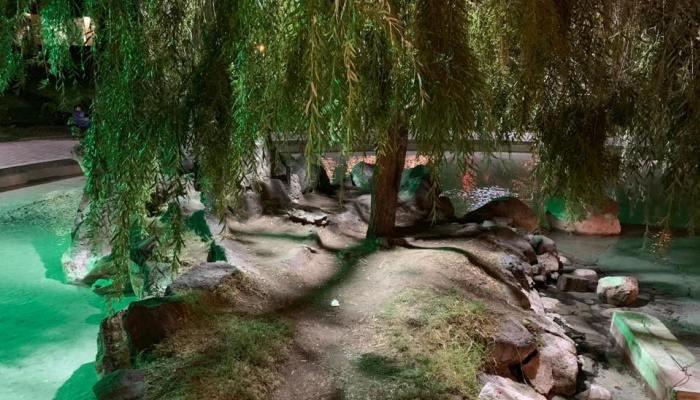 «Կարապի լճի կղզին ոչ միայն բացեց դռները, այլև լուսավորվեց». Փաշինյան