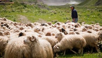 Հայ-վրացական սահմանին կայծակն սպանել է հովվին ու տասնյակ ոչխարների