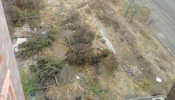 Ծառերի սպանդ՝ Երևանում. օգտատերերն ահազանգում են