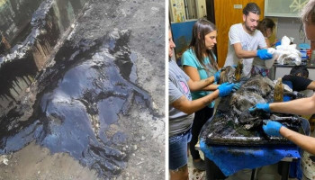 "People Discover A Dog 100% Covered In Tar, Work Tirelessly To Save Her, SucceedIf it wasn't for people who go out of their way to do everything they can to rescue animals in trouble, lots of them would end up badly harmed. Or worse. An Argentinian not-for-profit organization called ""Proyecto 4 Patas"" and some locals recently rescued a dog named Aloe who was completely covered in tar. She couldn't move even an inch and it was a group of kids who alerted people to the animal's plight. Fortunately, members of the organization took it upon themselves to help poor Aloe out. It took 8 volunteers 9 hours of nonstop work, 50 liters of oil, and 3 baths to completely clean the doggo. The silver lining was that Aloe is now healthy and safe, and the problem showed how determined and ready to help the people of Libertad in Buenos Aires really are! From the local kids and neighbors to the police and firefighters, nearly everyone who was there lent a helping hand. Scroll down for Bored Panda's interview with ""Proyecto 4 Patas."""