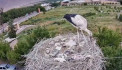 White stork nest cam in Armenia by NABU