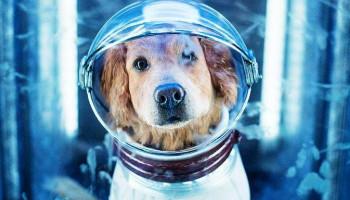 Ученые создадут устройство для общения с животными через передачу мыслей