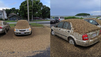WCCO Weather Radar Picks Up Massive Mayfly Hatch