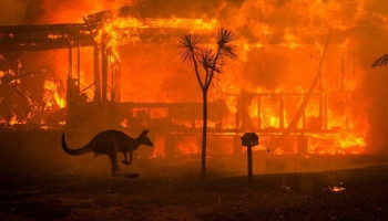 Nearly 3 billion animals killed or displaced by Australia fires