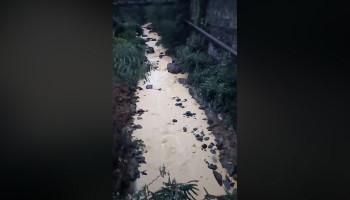 Լալվար գետի ջրի լաբորատոր հետազոտության արդյունքները հայտնի են