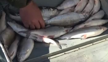 Բացահայտվել է Սևանա լճից շուրջ 127 տոննա ձկների ապօրինի արդյունահանման հանցավոր սխեմա