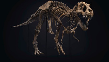 A T. Rex Skeleton Arrives in Rockefeller Center Ahead of Auction