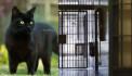 Վարժեցված կատվի միջոցով փորձել են թմրանյութ մտցնել Սևան ՔԿՀ