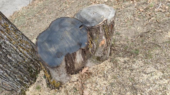 «Մեկ ամիս Դիլիջանի անտառները մնացել էին ազգային պարկի հույսին». ահազանգ
